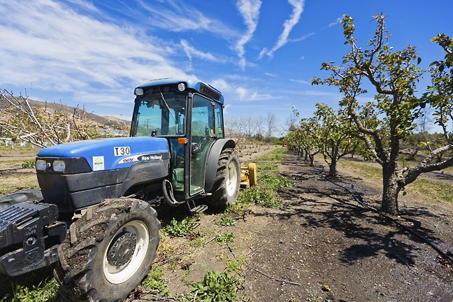 SOUR GRAPES:  Cal Poly administration is developing an update to its master plan. Students and professors are worried the final proposal will call for destroying some of the university's farmland, replacing it with homes, parking lots, and hotels. - PHOTO BY KAORI FUNAHASHI