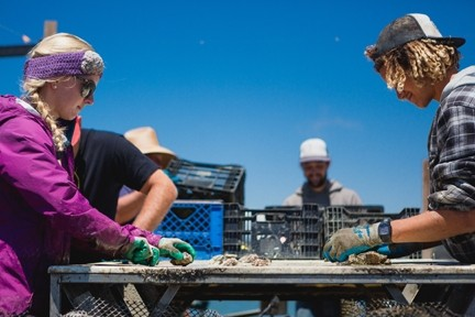 HANDS ON DECK:  Marine Biologist and Nursery Manager Jennifer Bowin (left) and crew member Michael Baham sort Pacific Gold oysters on the Morro Bay Oyster Company barge. - PHOTO BY KAORI FUNAHASHI