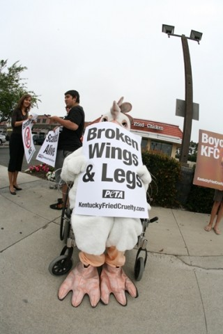 FOR THE BIRDS :  PETA activist Kelsey Gibb hopped into a chicken suit and rolled around downtown Grover Beach on June 23 in protest of animal rights abuses allegedly perpetrated at Kentucky Fried Chicken's factory farms. - PHOTO BY JESSE ACOSTA