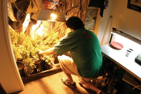 OVERGROW THE GOVERNMENT:  Mark, who's been diagnosed with insomnia, tends his small indoor pot garden. With the help of other local growers, he provides medical marijuana to more than 40 qualified patients from the Five Cities area and beyond. - CHRISTOPHER GARDNER