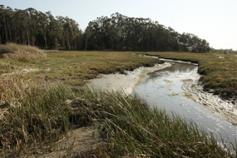 EAST SWEET SPRINGS :  Eight acres of bayfront property in Los Osos will be set aside for birds, wildlife, native plants, and public access. - PHOTO BY STEVE E. MILLER