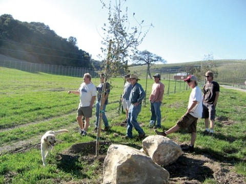 WARRING WINERIES :  These small-winery owners in a quaint rural area west of Paso Robles are worried about their future, with a much larger facility proposed for this quiet Anderson Road site. - PHOTO BY KATHY JOHNSTON