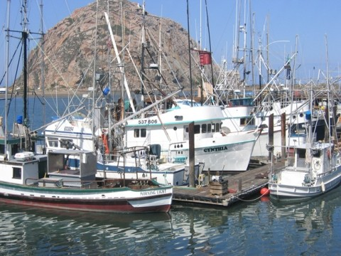 HEADING OUT :  Morro Bay fishing boats are now targeting king salmon, with the opening of the season May 1. - PHOTO BY KATHY JOHNSTON