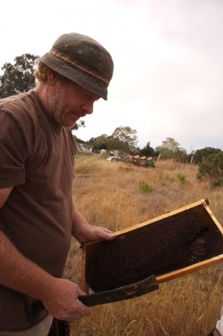 OUT AND ABOUT :  Tim Vaughn has seen his own hives dwindle, but has also reported an abundance of calls from people asking him to come take care of swarms on their property. - PHOTO BY JESSE ACOSTA