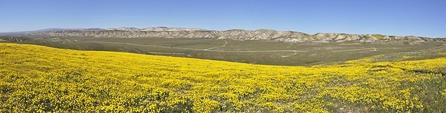 KING'S VIEW:  Goldfields stretch out toward the valley floor, looking north up the Carrizo Plain from Quail Springs Road on the southern end of the national monument. - PHOTO BY CAMILLIA LANHAM