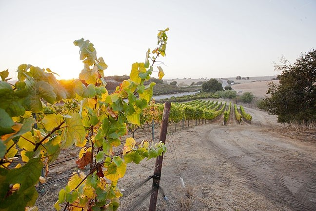 AG CLUSTER:  The subdivision planned for Laetitia Vineyard and Winery stumbled once again when the SLO County Board of Supervisors upheld the Planning Commission's denial of the proposed housing development. - FILE PHOTO BY STEVE E. MILLER