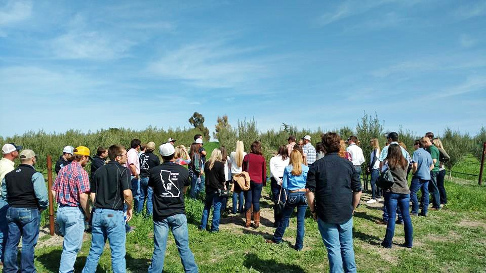 FARM TOURS CEASE For the foreseeable future, local ag operations will not be holding farm tours, like the one pictured at The Groves at 41. The North County olive oil farm is one of the Central Coast ag producers that have lost business due to COVID-19. - PHOTO COURTESY OF KAREN TALLENT