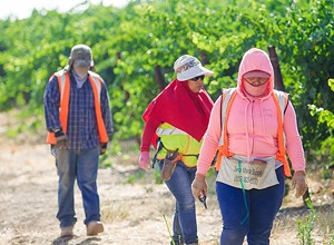 Labor contractors, advocacy organizations agree that the Farm Workforce Modernization Act is the right step forward—now it needs to pass the Senate