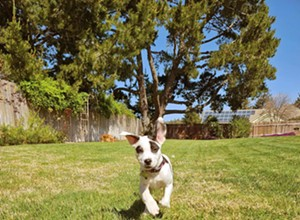 Pet connections: A Central Coast social media group assists in pet shelter adoptions