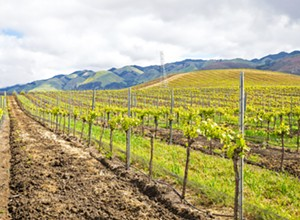 Wolff Vineyards follows the principles of people, planet, and prosperity for a holistic approach to sustainability