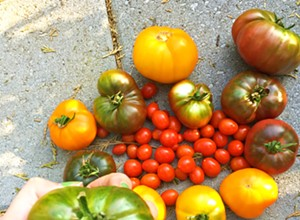 Taste 30-plus heirloom tomato varieties at Windrose Farm on Sept. 22