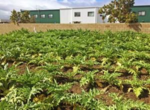 Farm fresh: A trip to Blosser Urban Garden in Santa Maria