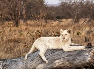 Locals' safari photography is on display at The Photo Shop