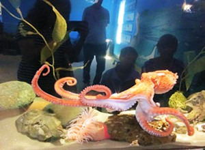 The Central Coast Aquarium is working diligently on a plan to reopen its facility