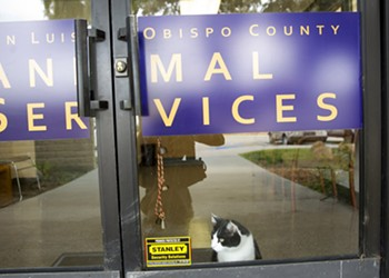 North County cities and SLO County at impasse on animal shelter