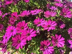 Uploaded by SLO Botanical Garden