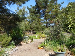 Learn about and enjoy beautiful mediterranean plants - Uploaded by SLO Botanical Garden