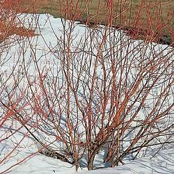 Winter Shrubs - Uploaded by SLO Botanical Garden