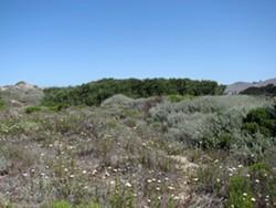 Restored habitat - Uploaded by SLO Botanical Garden