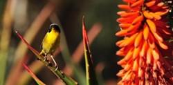 66032135_bird_walk-mike_bush.jpg