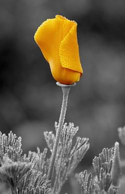 104b8741_flower_larger.jpg