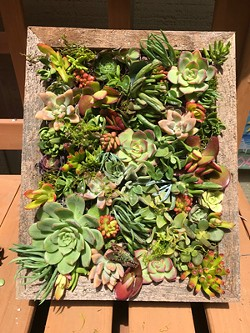 Create a beautiful project with succulents. - Uploaded by Joan Martin Fee