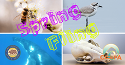 Spring break activities for kids (and adults!) of all ages - Uploaded by Events CCSPA
