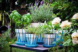 Pot pouring - Uploaded by Judy Maynard