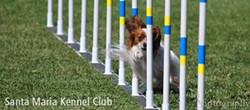 Santa Maria Kennel Club Canine Agility Trial - Uploaded by Sondra Robinson