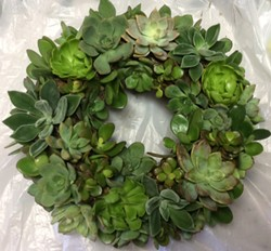 Choose your succulent project - Uploaded by Joan Martin Fee