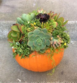 Create a charming fall centerpiece - Uploaded by Joan Martin Fee