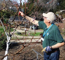 Master Gardener Norm Smith demonstrates fruit tree pruning technique. - Uploaded by Ardis Neilsen