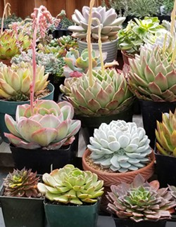 Hundreds of amazing plants for sale! - Uploaded by westernartist