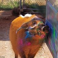 <em>Art Gone Wild</em> lets Oklahoma City Zoo critters get creative