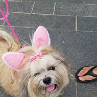 Myriad Botanical Gardens prepares for its fourth Doggy Easter Egg Hunt