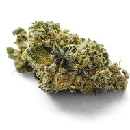 Flower Review: Cookie Monster Fire