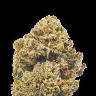 Strain Review: Purple Kush