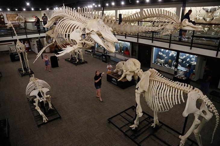 Museum of Osteology in Oklahoma City, Wednesday, June 24, 2015. - GARETT FISBECK