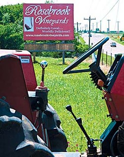 Rosebrook Vineyard has rows and rows of greening grapevines into their 3rd year of growth, and this nice red tractor parked out front.  mh