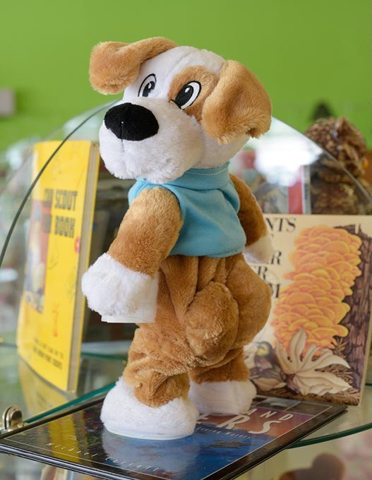 Bow Wow Wow twerking dog at Heart and Hand Thrift Store Monday, March 6, 2017. - GARETT FISBECK