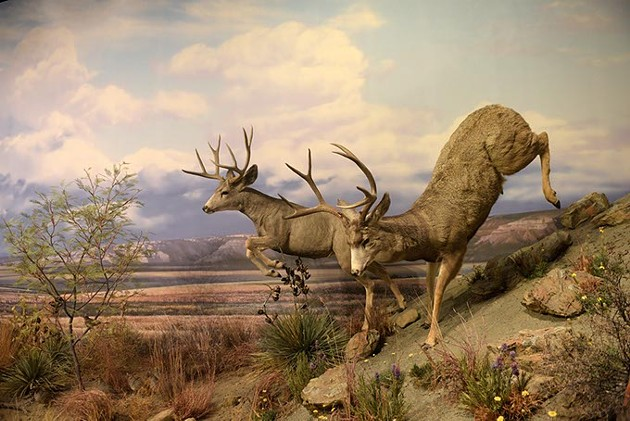 Hall of Natural Wonders at the Sam Noble Museum in Norman, Tuesday, June 27, 2017. - GARETT FISBECK