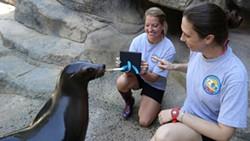 Sea-Lion-OKC-Zoo.jpg