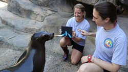 Sea-Lion-OKC-Zoo.jpg