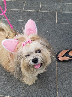 This is the fourth year Myriad Botanical Gardens has hosted an Easter egg hunt for dogs. (Photo Myriad Botanical Gardens / provided)