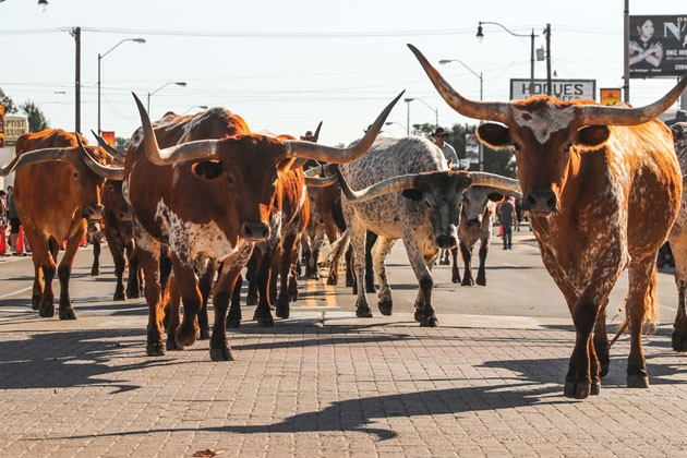 The annual Stockyards Stampede will be held Oct. 20. - PROVIDED