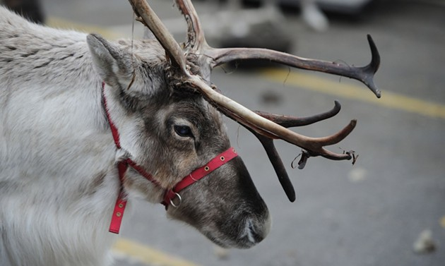 Reindeer will be on hand for photos at the inaugural Holly Jolly Shops. - REVOLVE PRODUCTIONS