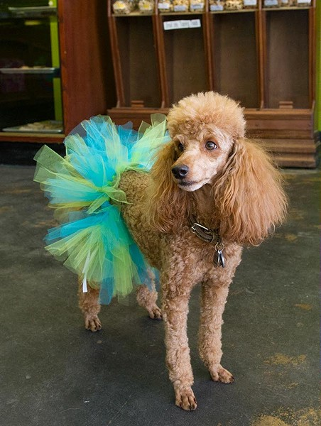 Because dogs need fancy birthday outfits, too. Available at Barking Dog Bakery (Shannon Cornman)