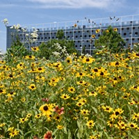 Flowers attract much-needed pollinators to the garden.
