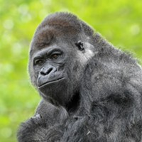 PRESS RELEASE OKC Zoo goes virtual during temporary closure