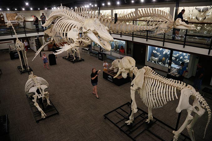 Museum of Osteology in Oklahoma City, Wednesday, June 24, 2015. - GARETT FISBECK